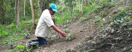 Reforestación en Montecristi, Ecuador.