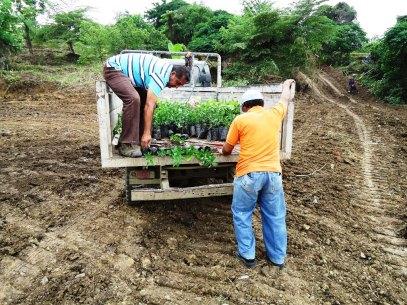 Transporte de plántulas para reforestación en Chone, Ecuador.