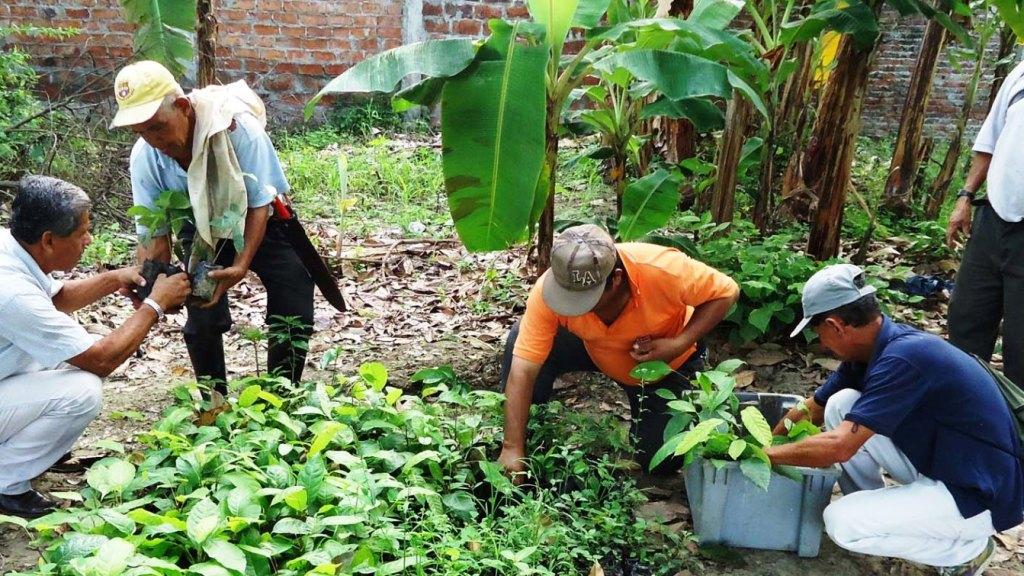 En Vivero Municipal de Chone reparten plántulas para reforestación. Ecuador.