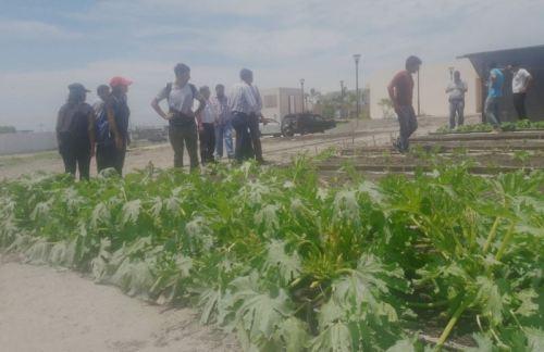 Uno de los huertos familiares que el consultor de la FAO vio en la ciudad de Manta.