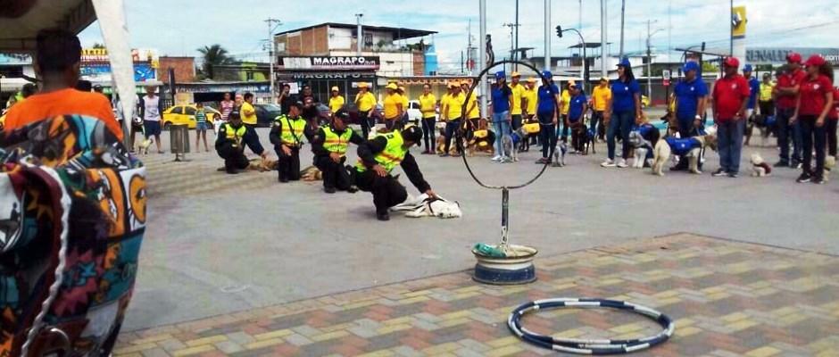 Ceremonia de clausura de un curso de adiestramiento canino en la ciudad de Manta. Manabí, Ecuador.