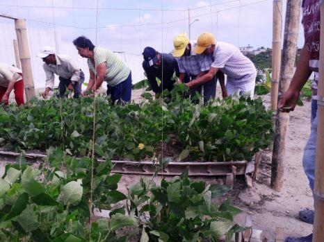 Una parte del huerto urbano cultivado a un lado del Centro Geriátrico del Patronato municipal de Manta.