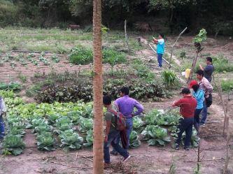 Cultivo de legumbres.