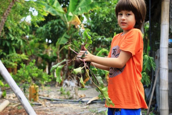 Mathias Pinargote Espinoza ayuda a sus padres a cultivar un huerto urbano ecológico en El Palmar de Manta. Manabí, Ecuador.