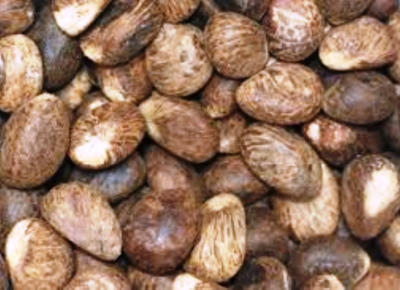 Semillas de marfil vegetal o tagua, sin cáscara.