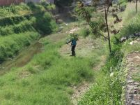 Un obrero municipal fumiga sobre la hierba para exterminar insectos transmisores de enfermedades.