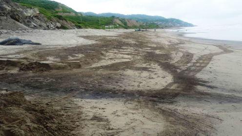 La playa y su entorno, después del barrido comunitario.