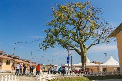 Este árbol de ceibo es el eje de la nueva urbanización popular Ceibo Renacer, en Manta.
