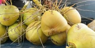 Festival del Coco, el fruto al natural