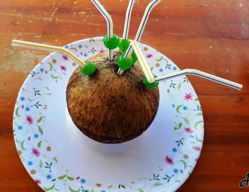 Festival del Coco, el fruto con sorbetes