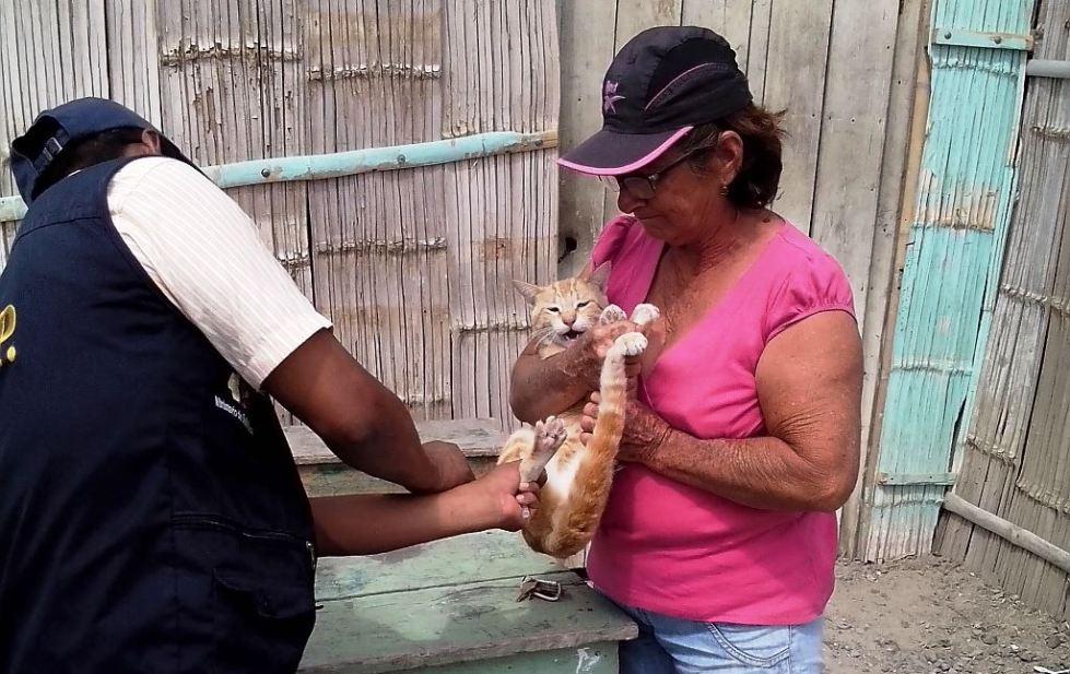 Un miembro del servicio público de salud vacuna a un gato en Manta. Manabí, Ecuador.
