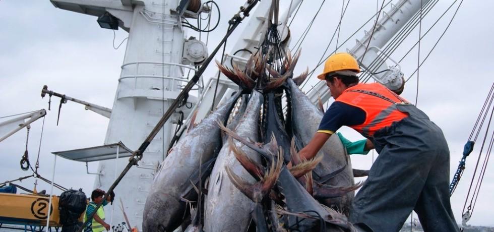 Descargando atún tropical en el puerto de Manta. Manabí, Ecuador.