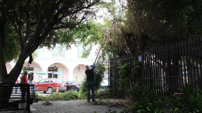 Obreros municipales de Manta podan los árboles del Parque Eloy Alfaro. Manabí, Ecuador.