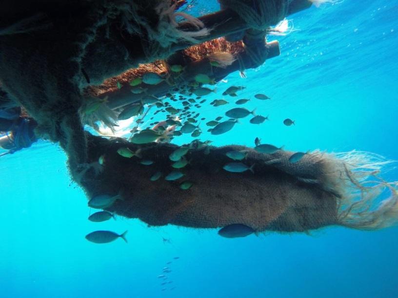 Plantado agregador de peces en un punto del océano.