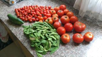 Algunos de los productos cosechados en un huerto orgánico dentro de la ciudad de Manta.