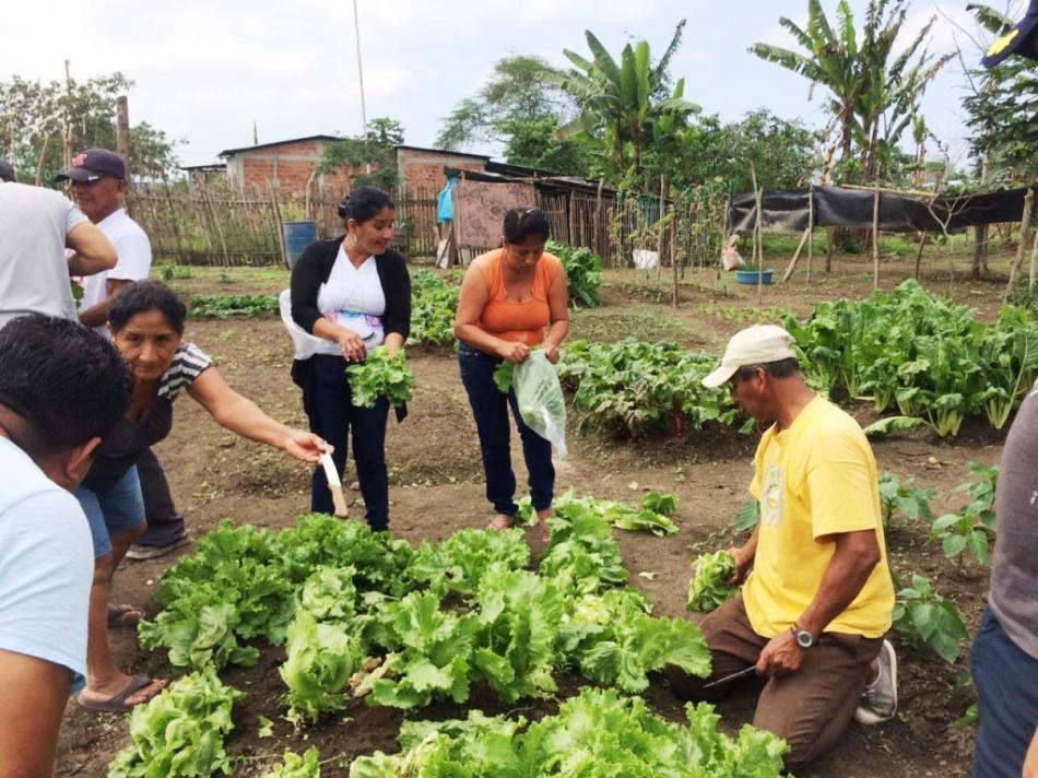Huerto orgánico familiar en la ciudad de Manta. Manabí, Ecuador.