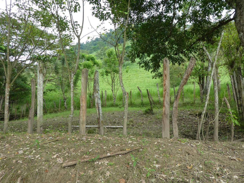 En la Hacienda La Arabia se cultiva bastante, pero al mismo tiempo se preservan las arboledas.
