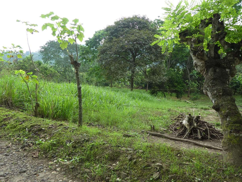 El tradicional cerco de alambre de púas, sostenido en estacas de piñón.