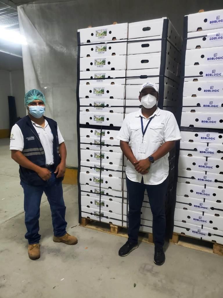 aguacate hass Santa Elena